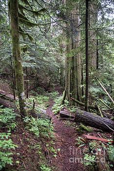 Rod Wiens - the Trail