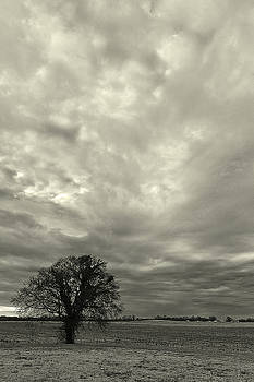 The Tree And The Clouds by Ron Dubin