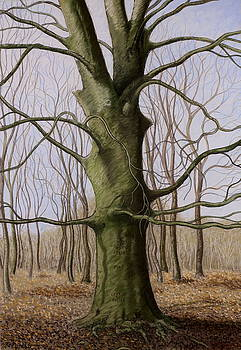 The tree at oaths. Marchiennes forest by Raphael Seygnovert