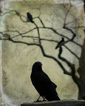 The Tree Behind Crow by Gothicrow Images