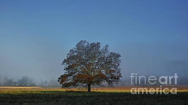 The Tree by Douglas Stucky