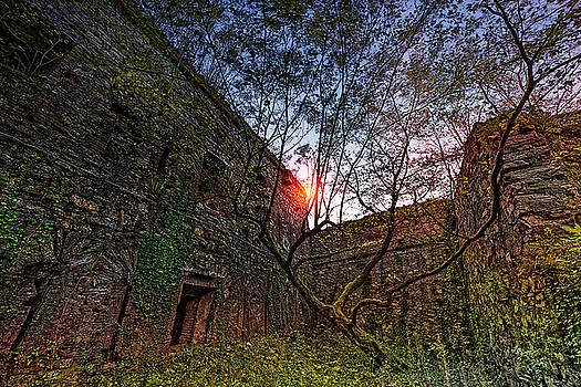 The Tree In The Fort - L'albero Tra Le Mura Del Forte by Enrico Pelos