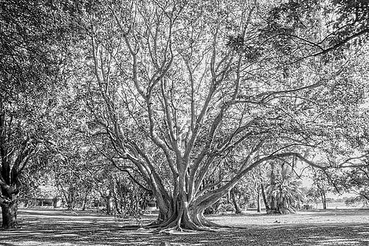 The tree in the middle by Taschja Hattingh