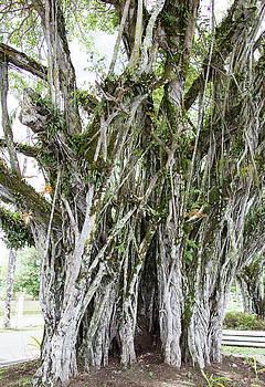 Ramunas Bruzas - The Tree Of Life