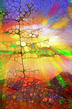 The Tree of Rainbows by Tara Turner
