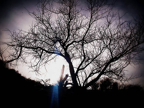 The Tree of Wisdom by Nature Macabre Photography