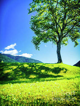 The tree on the hill by Silvia Ganora
