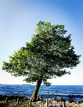onyonet  photo studios - The Tree