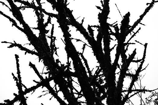 Paul W Sharpe Aka Wizard of Wonders - The Tree Out Back