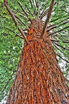 The Tree by Perry Frantzman