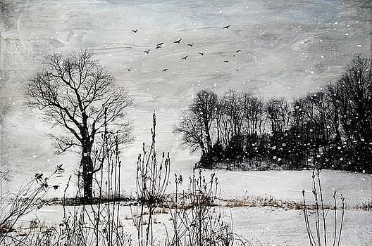The Tree by Stephanie Calhoun
