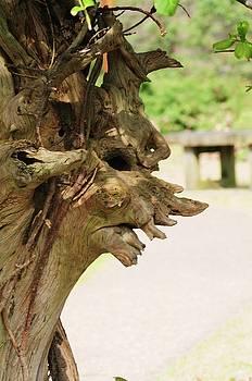 The Tree Witch by Jennifer Englehardt