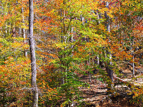 The Trees Of Autumn by Rick Davis