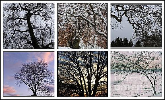 The Trees of Winter - A Collage by Dora Sofia Caputo Photographic Design and Fine Art