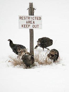 Mike Dawson - The Turkey Patrol