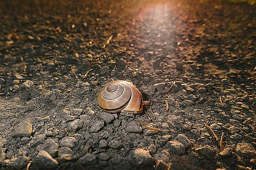 The twilight of the snail by Asbed Iskedjian