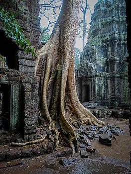 The Twisted Tree by Paki O'Meara