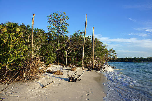 The Unspoiled Beauty of barefoot Beach in Naples - Landscape by Robb Stan