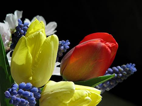 The Vibrance Of Spring by Angela Davies