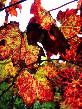 Elizabeth Hoskinson - The Vines in Winter