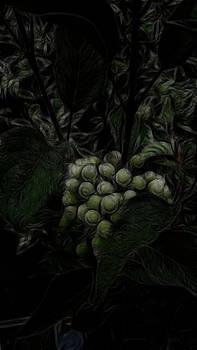 The Vineyard by Bobbie Barth
