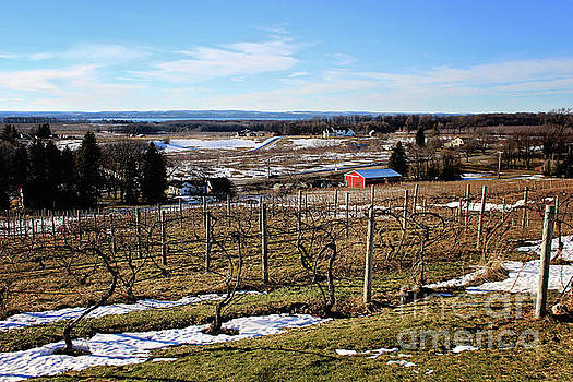The Vineyard on Old Mission by Laura Kinker