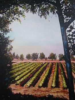 The vineyard by Ray Khalife
