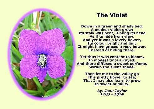 The Violet Classical Wildflower Nature Poetry By Jane Taylor by Maxwell