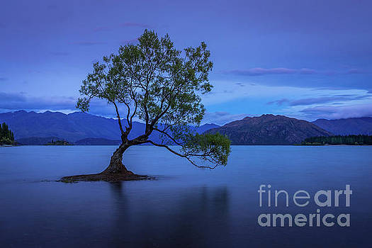 The Wanaka Tree 2 by Paul Woodford