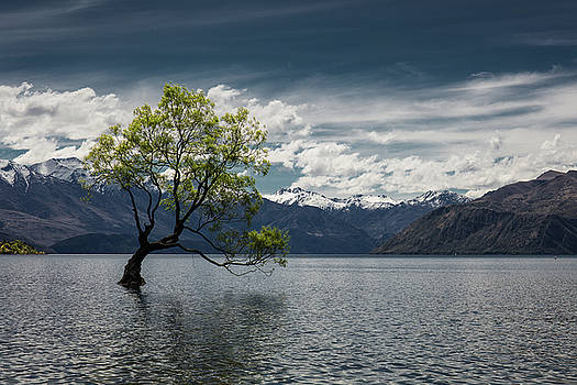 The Wanaka Tree by Marcel Kaiser