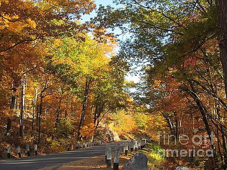The Warmth of Autumn by Loretta Pokorny
