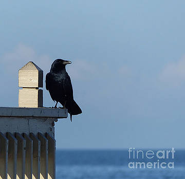 The Watcher by John Eide