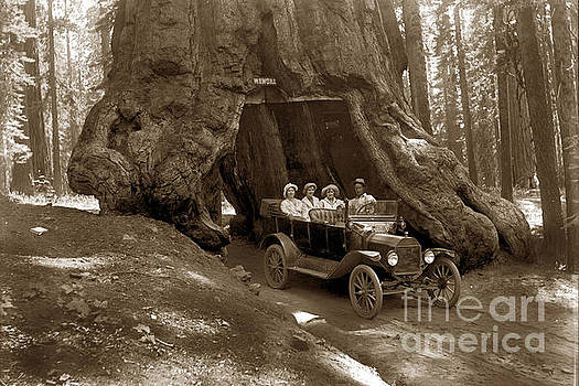 California Views Mr Pat Hathaway Archives - The Wawona Tree Mariposa Grove, Yosemite  Circa 1916
