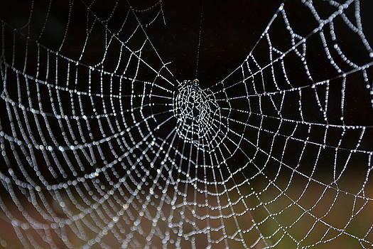 The Web by Jennifer Conroy