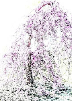 Angela Davies - The Weeping Cherry Tree