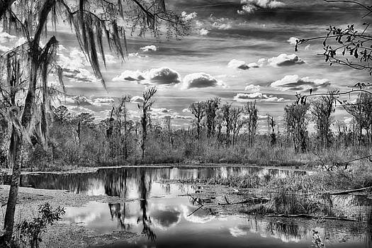 The Wetlands by Howard Salmon