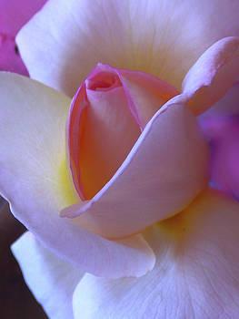 The White Rose by Natalya Shvetsky