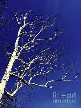 Onedayoneimage Photography - The White Tree