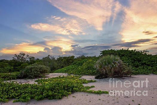 The White Watcher - Sunset in Mizell-Johnson Park by Matt Tilghman