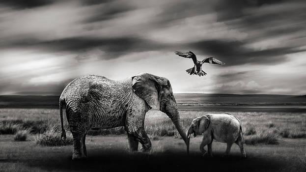 The wild by Christine Sponchia