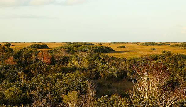 The Wild Everglade by Jorge Mejias