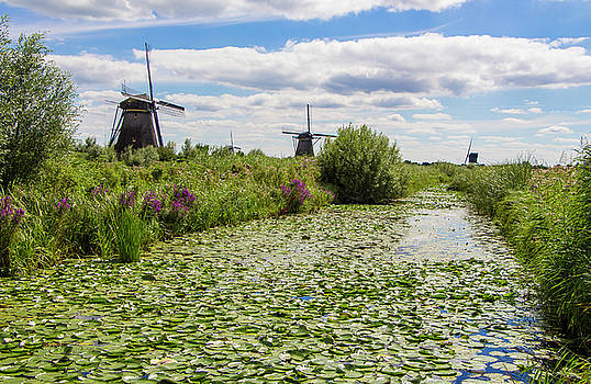 Venetia Featherstone-Witty - The Windmills of Kinderdijk in the Netherlands