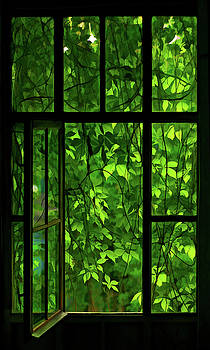 The Window by Dale Jackson