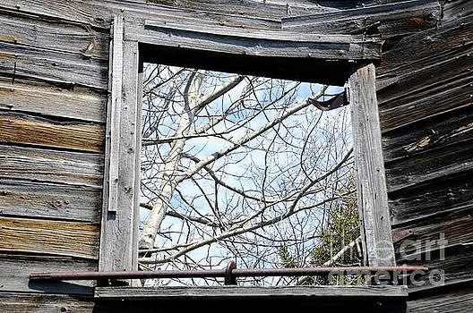 The Window by Sandra Updyke