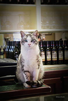The Winery Cat by Rebecca Samler