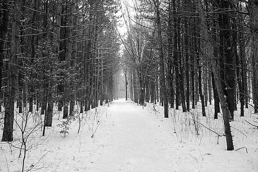 The Winter Path by Patricia Gapske