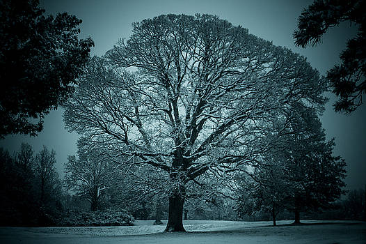 The Winter Tree by Kristy Creighton