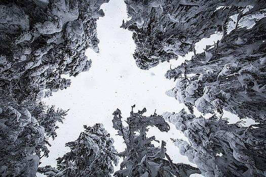 The Winter Woods by Sam Egan