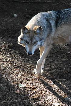 The Wolf by Michelle  BarlondSmith