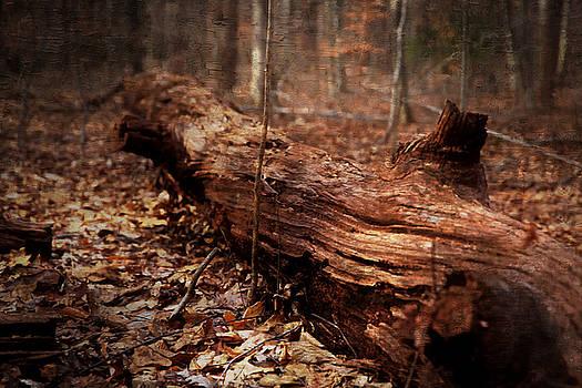 The Woods - oil by Scott Fracasso